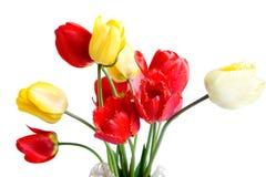 jaune rouge de tulipes image libre de droits