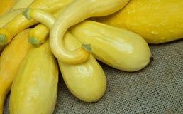jaune sélectionné frais de courge image stock
