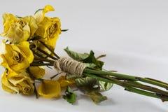 jaune sec de roses Images libres de droits