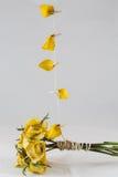 jaune sec de roses Photo stock