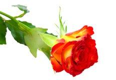 jaune simple de bouton de rose rouge Photo libre de droits