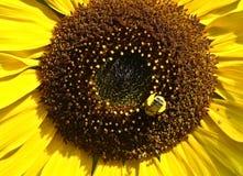 Jaune vibrant Image stock