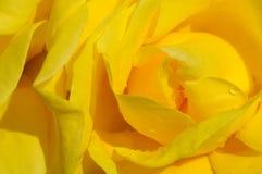 Jaunissez l'instruction-macro rose de fleur Photo stock