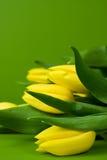Jaunissez les tulipes étroitement vers le haut Photos stock