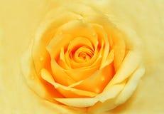 Jaunissez rose Photographie stock libre de droits