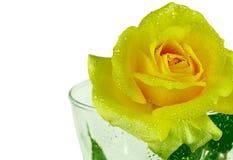Jaunissez rose d'isolement sur le fond blanc Photos stock