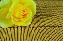 Jaunissez rose d'isolement sur le fond blanc Photographie stock