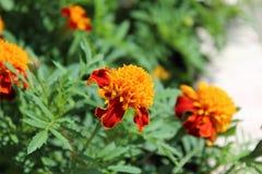 Jaunissez une fleur rouge Photo stock