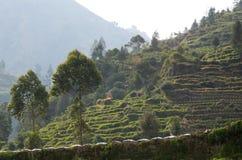 Java, Индонесия Взгляд от дороги горы на холмах с зелеными полями стоковое изображение