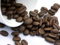 Java. Coffee cup and beans, shallow dof stock photography