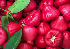 Java apple. For sale at the market royalty free stock photos