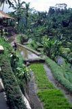 Java-Bauernhof Lizenzfreie Stockbilder