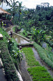 Java Farm Indonesia. Farmers house perched high above his terraced rice paddies, Java, Indonesia Royalty Free Stock Images