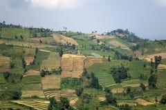 Java, Indonésia montes com lotes de campos do arroz do grau diferente de uma maturidade imagens de stock