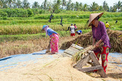 JAVA, INDONÉSIE - 29 décembre 2017 : Travailleurs locaux travaillant dans t Image libre de droits