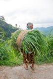 JAVA, INDONESIA - 17 SETTEMBRE 2016: Donna più anziana che trasporta erba in Indonesia Immagini Stock Libere da Diritti
