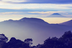 Java landskap royaltyfria foton