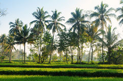 Java 1. Picture was taken in Central Java, Indonesia royalty free stock images
