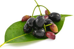 Java Plum fruit Stock Photo