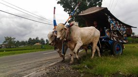 Java traditional transportations. The ancient transport on the island of java Stock Image