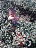 Javad all'azienda agricola dei peperoncini rossi Fotografia Stock Libera da Diritti