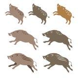 Javali, ilustrações animais Imagem de Stock