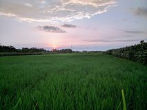 Javanese`s farm under the sunset royalty free stock photography