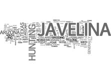 Javelina Little Pigs With A Big Fight Text Background Word Cloud Concept Stock Photography