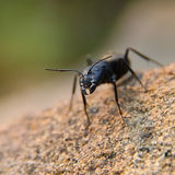 Jaw ant Stock Photos