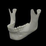 Jaw bone. 3d rendered illustration - jaw bone Royalty Free Stock Image