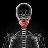 Jaw bone Stock Images