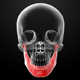 Jaw bone Royalty Free Stock Photography