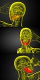 Jaw bone. 3d rendering illustration of jaw bone Stock Image