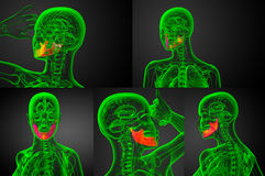 Jaw bone. 3d rendering illustration of jaw bone Royalty Free Stock Images