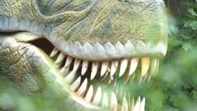 Jaw and fangs of carnivour predator dinosaur, archaeology and paleontology. Stock footage stock footage