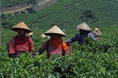 Jawa rolnicy Zdjęcie Royalty Free