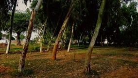 jawad φωτογραφία του Ahmed στοκ φωτογραφία