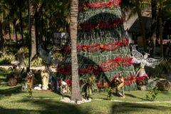 Jawna choinka z czerwonym zespołem między palmami w słońcu w Cancun Mexico w lecie obraz royalty free