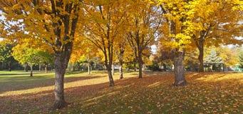 Jawnego parka jesieni panorama Gresham Oregon. Obraz Royalty Free