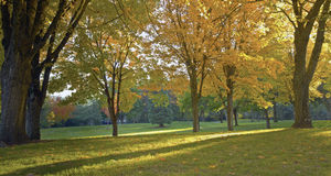 Jawnego parka panorama Gresham Oregon. Zdjęcia Royalty Free