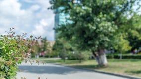 Jawny odtwarzanie park na lato słonecznym dniu zbiory