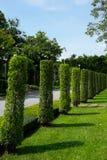 Jawny ogród i park - Tajlandia Obrazy Stock