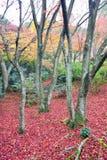 Jawny park w Jojakkoji świątyni Fotografia Royalty Free