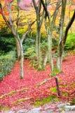 Jawny park w Jojakkoji świątyni w jesieni Zdjęcia Stock