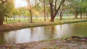 Jawny park z drzew, rzeki i nieba tłem w mieście, Jezioro z zieleń parkiem i słońca światłem Natury scena z racą w lecie HD zdjęcie wideo