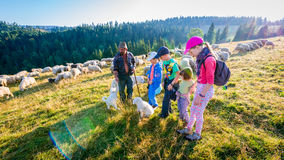 Jaworki, Poland - August 30, 2015: Summer adventure - shepherd grazing sheep in the mountains. Jaworki, Poland - August 30, 2015: Summer adventure - meeting with royalty free stock image