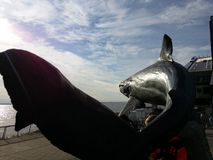 Jaws dreams of faraway shores Stock Image