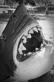 Jaws royalty free stock photography