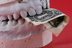 Jaws hold banknote. On red backgound Royalty Free Stock Photos