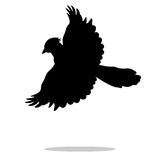 Jay bird  black silhouette animal Royalty Free Stock Photography